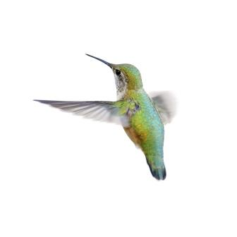 humming bird and its impact on SEO